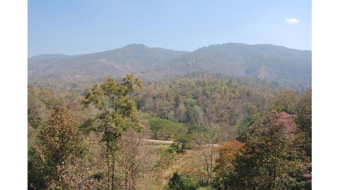 Végetation Nord Thailande
