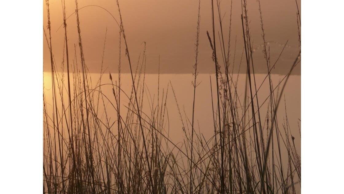 Bord de rivière à l'aube