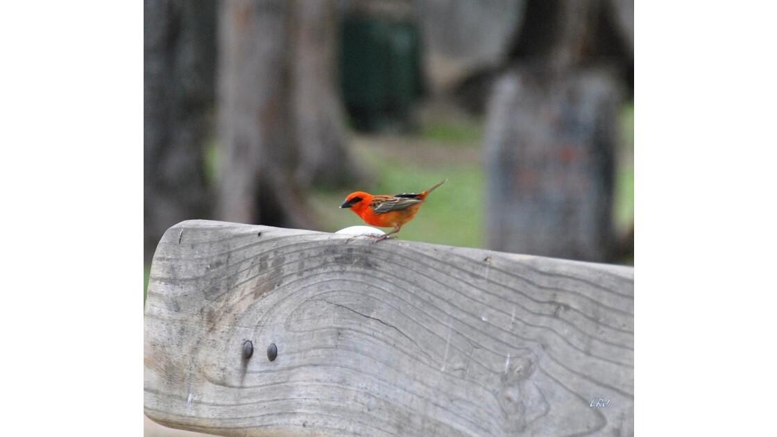 Un Cardinal !