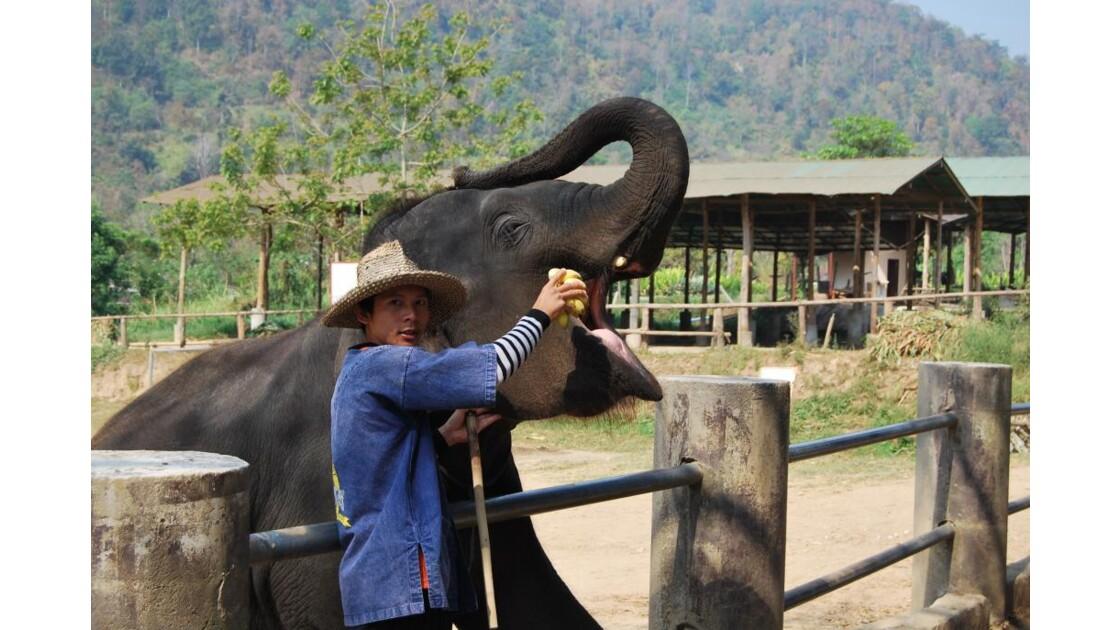 Cornac et son Elephant