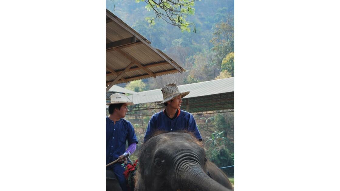 Cornacs et Elephants