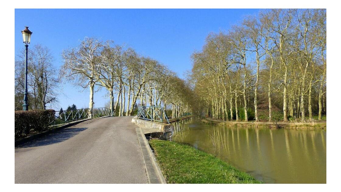 Pont et platanes du Vieux-Canal