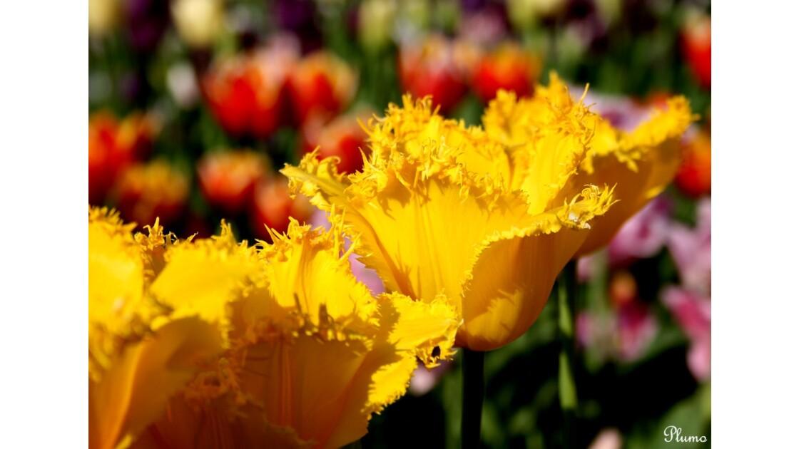 17_Le_jardin_des_fleurs.jpg