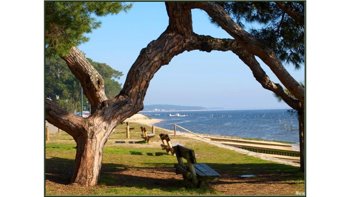 Chapelle : pin, bancs, plage et Bassin