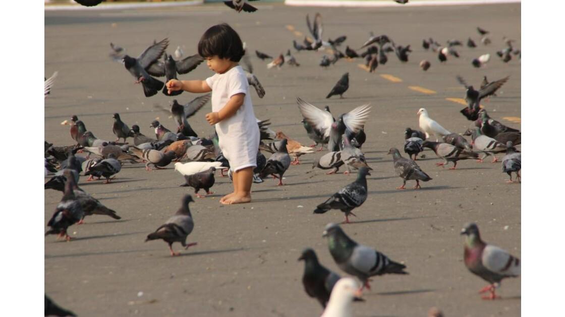 IMG_3021Petit bout aux pigeons