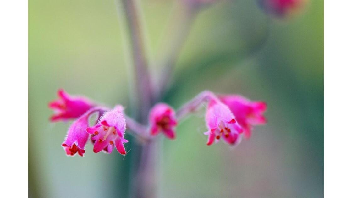 Mini fleur, macro beauté....