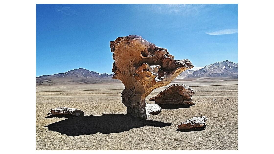 Arbre pétrifié désert de Siloli