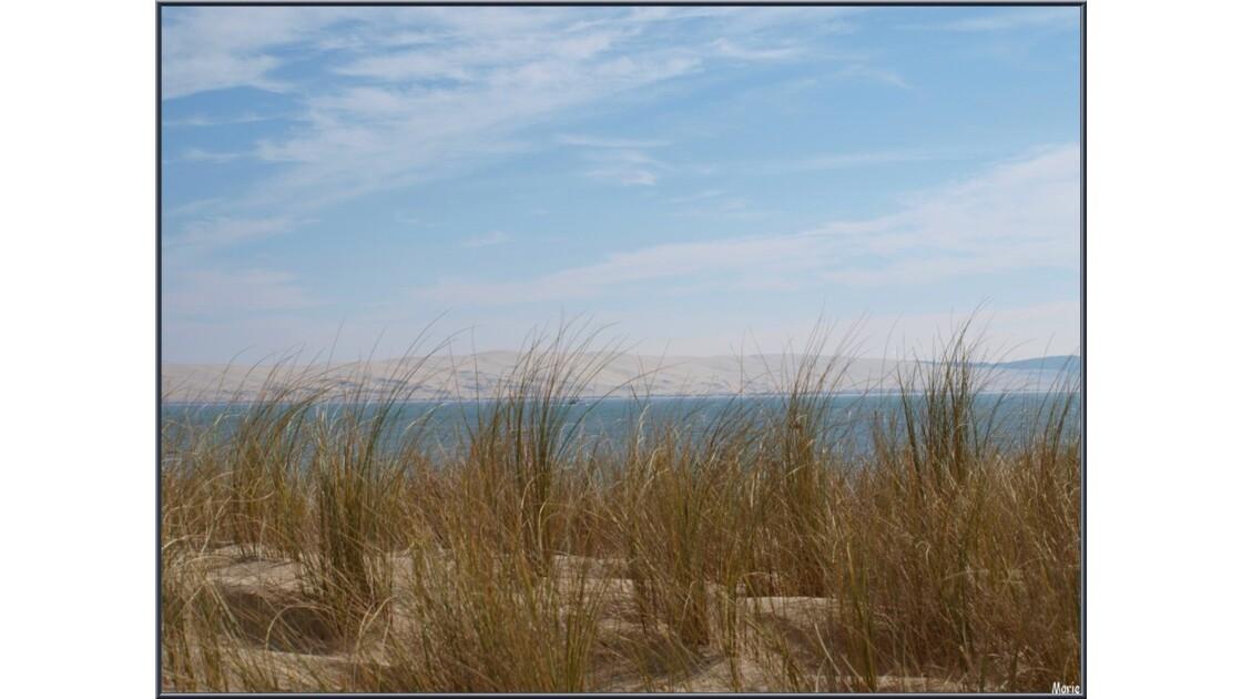 La Pointe, Oyats, Bassin et Dune du Pyla