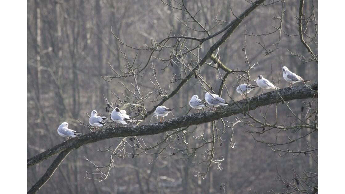 L'importance du plumage