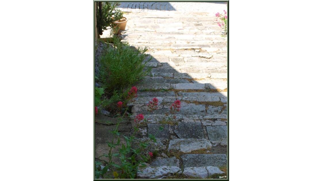 Ruelle en calade aux valérianes_P604044