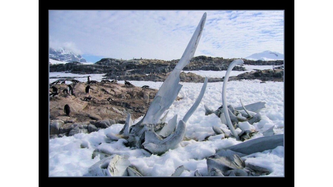 Cimetière de baleines