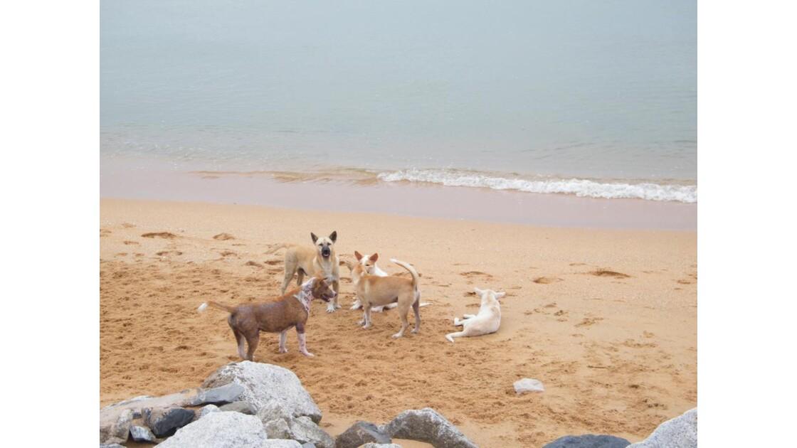 les rois de la plage