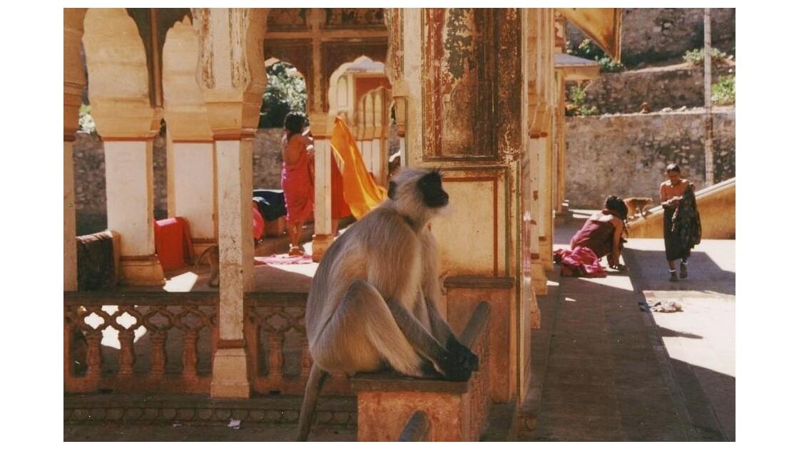 Jaipur, Monkey Temple