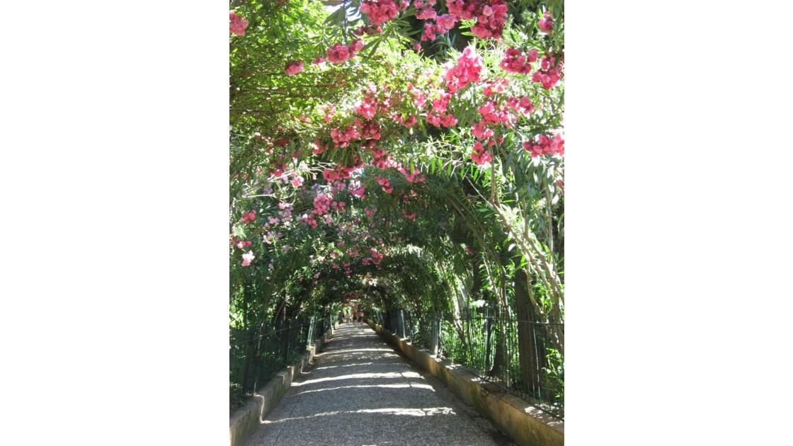 Alhambra, allée de rosiers