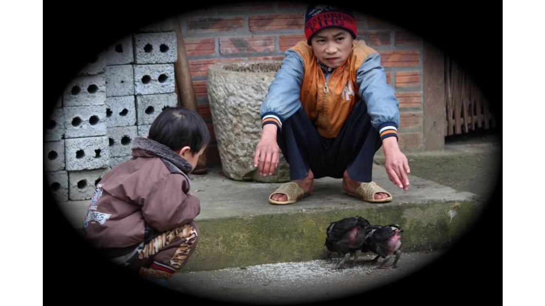 Enfants et futur coq de combat