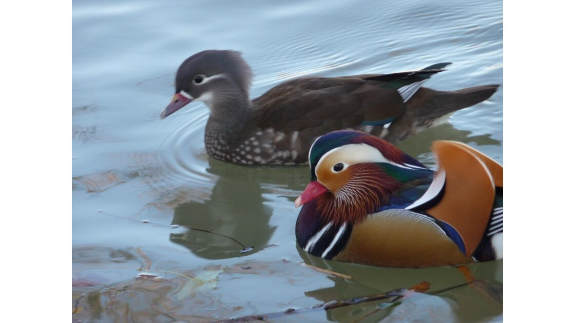 M. & Mme Canards