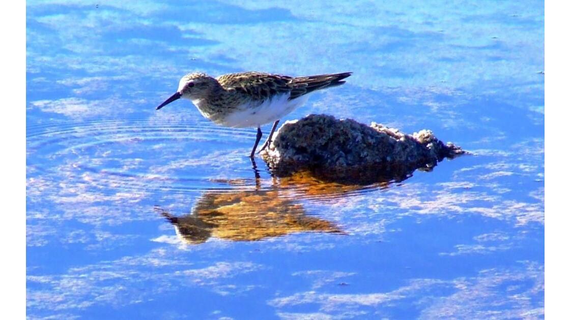 Lacs de sel Cejar reflet