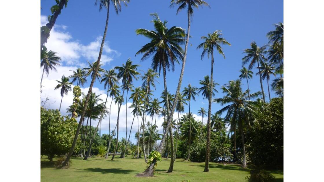 jardin à Tahiti
