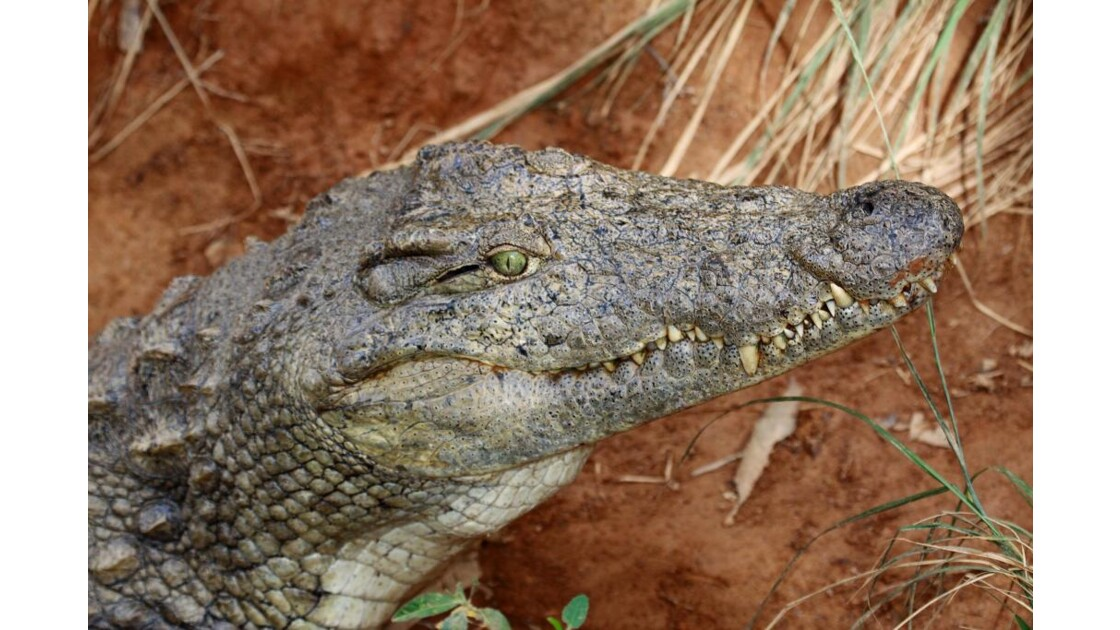 gloups! croco Andasibe, Madagascar
