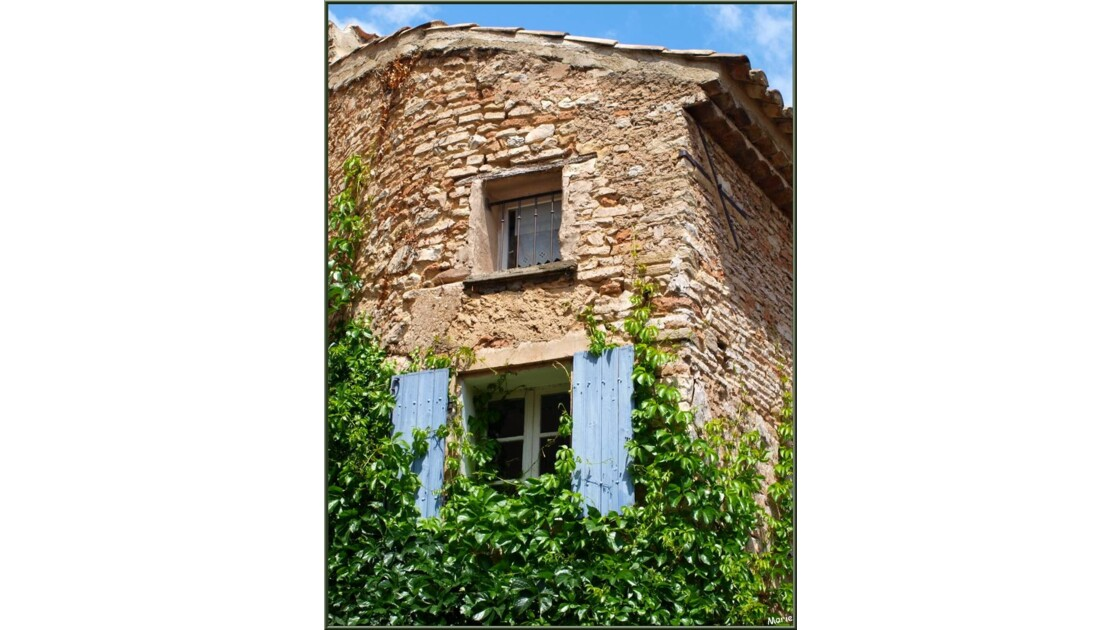 Maison aux volets bleus et vigne vierge
