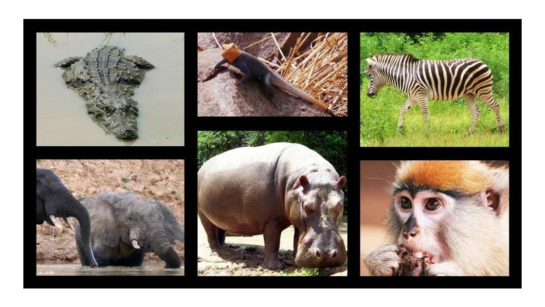 Animaux africains.jpg
