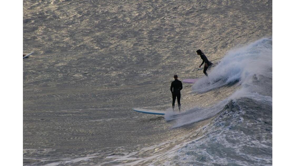 surfeurs a manly