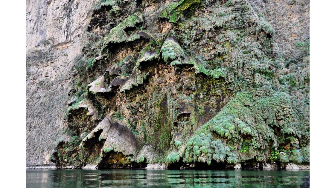 Sumidero, un étrange arbre de Noel