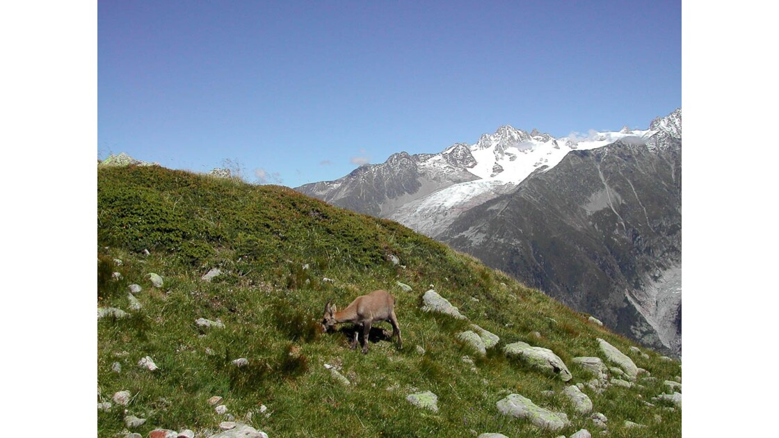 Chamoix__Argentière__Alpes__France_.jpg