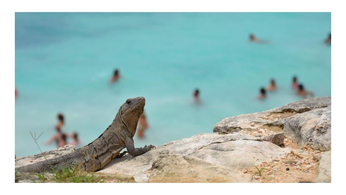 surveillant de plage !!