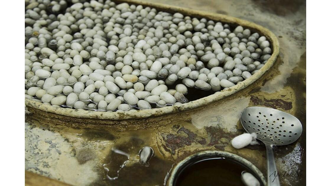 Cocons de soie avant filage