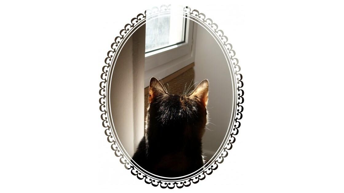 Portrait de Luna ! mdr + lol !