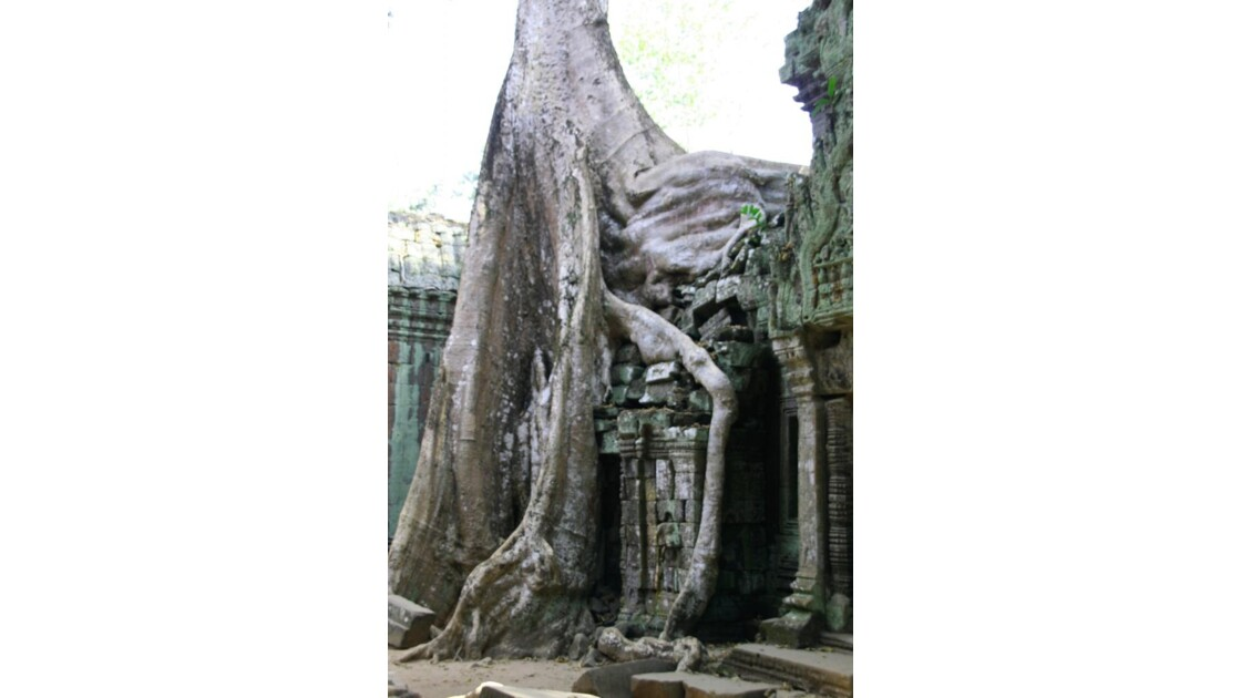 Fromagers & Ta Prohm.JPG
