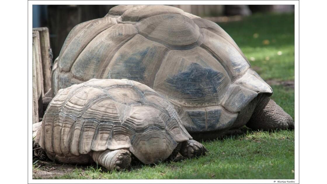Zoo_de_La_Palmyre__113_sur_168_.jpg