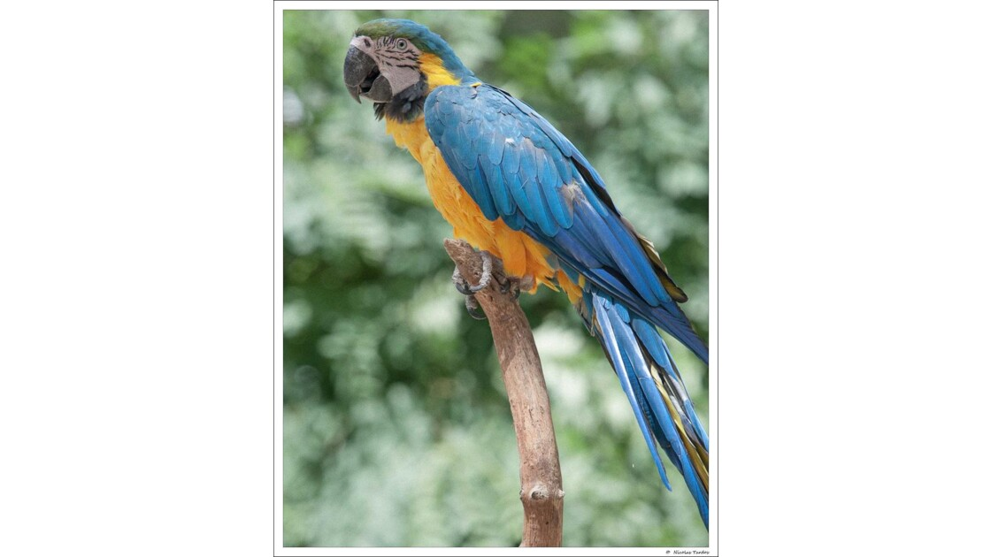 Zoo_de_La_Palmyre__115_sur_168_.jpg