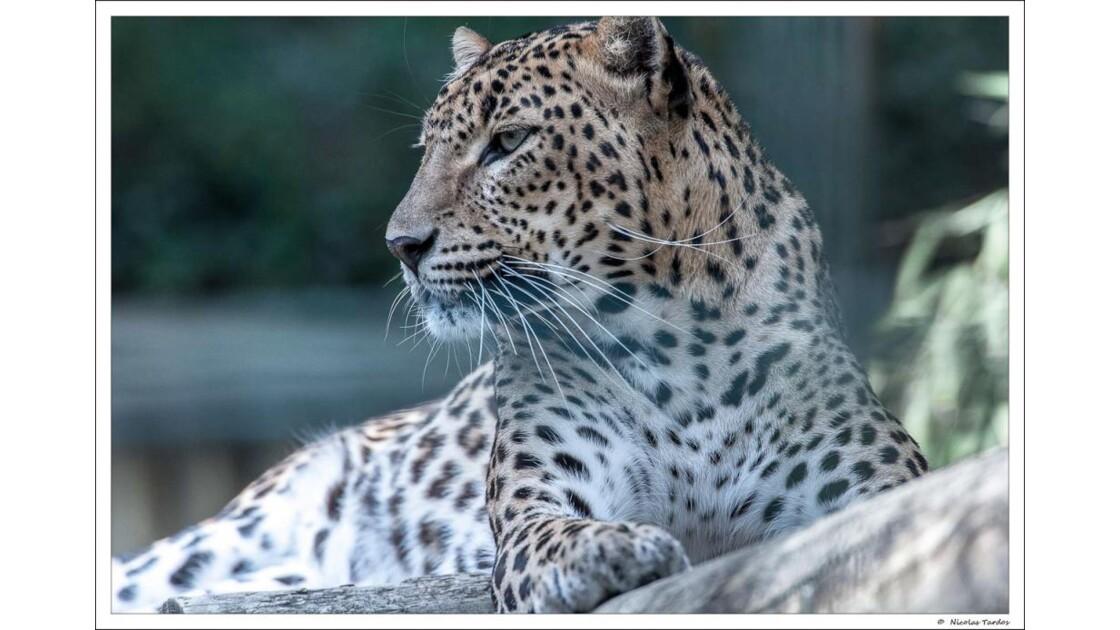 Zoo_de_La_Palmyre__133_sur_168_.jpg