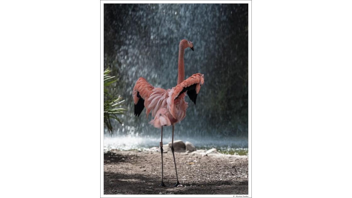 Zoo_de_La_Palmyre__151_sur_168_.jpg