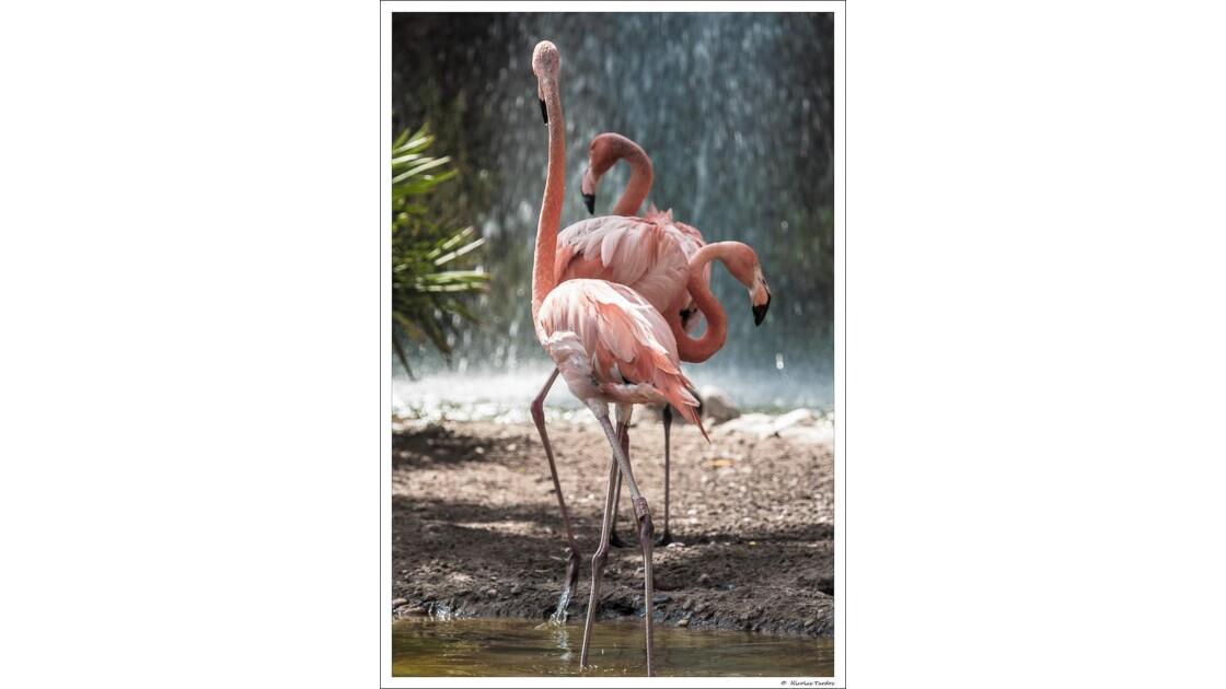 Zoo_de_La_Palmyre__152_sur_168_.jpg