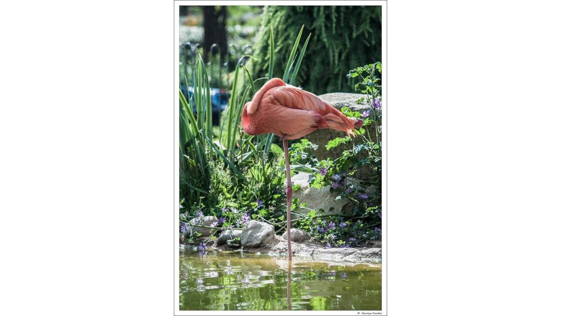 Zoo_de_La_Palmyre__153_sur_168_.jpg