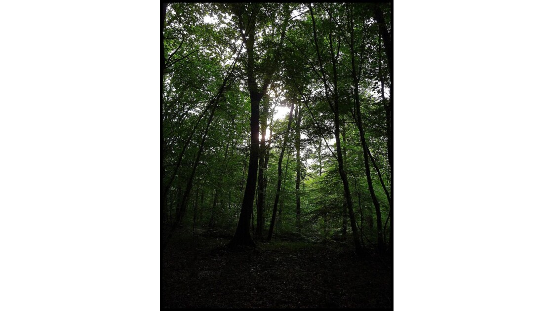 Le vert de la forêt...