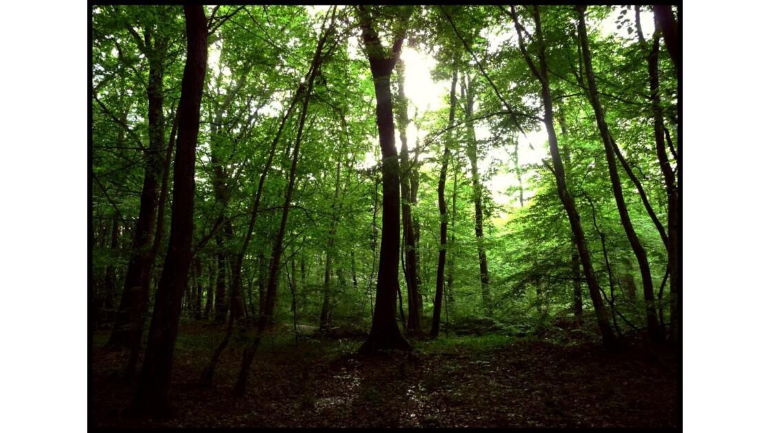Le vert de la forêt délivre...