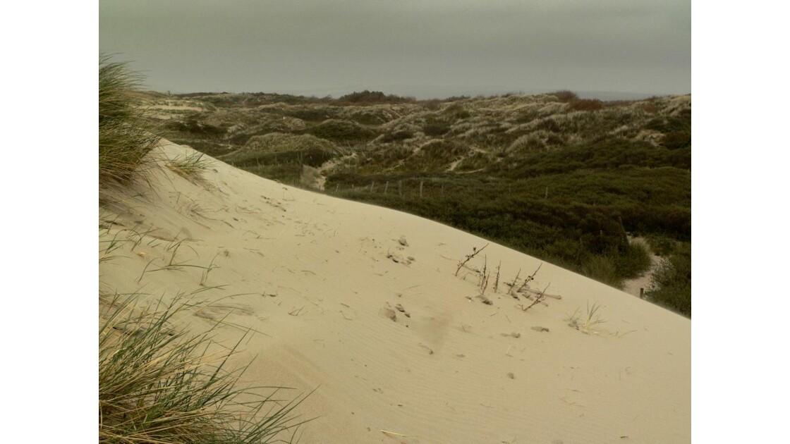 Dans les dunes I