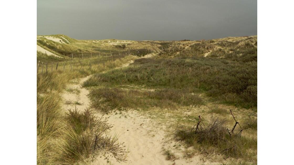 Dans les dunes III