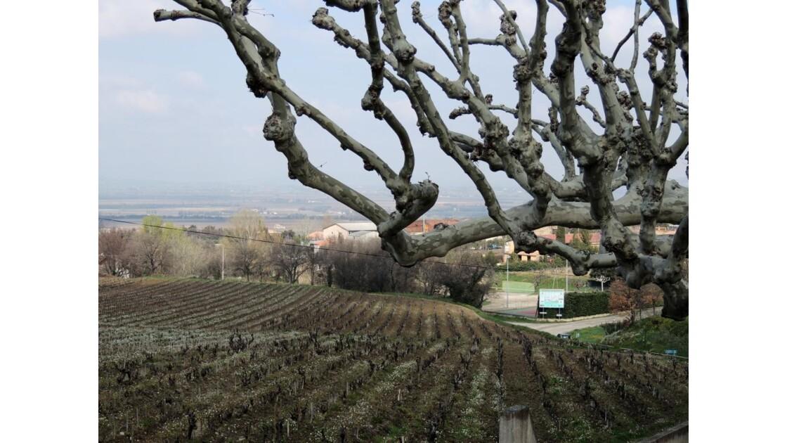 Vilage_Gigondas_Provence.JPG