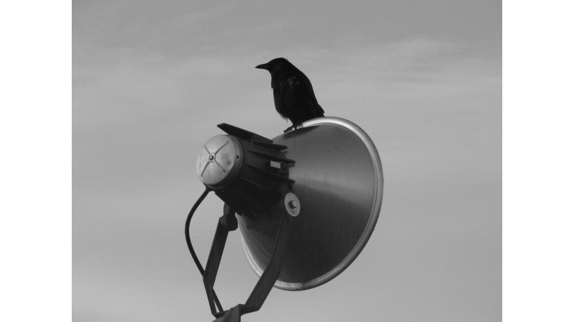 Le Corbeau ....