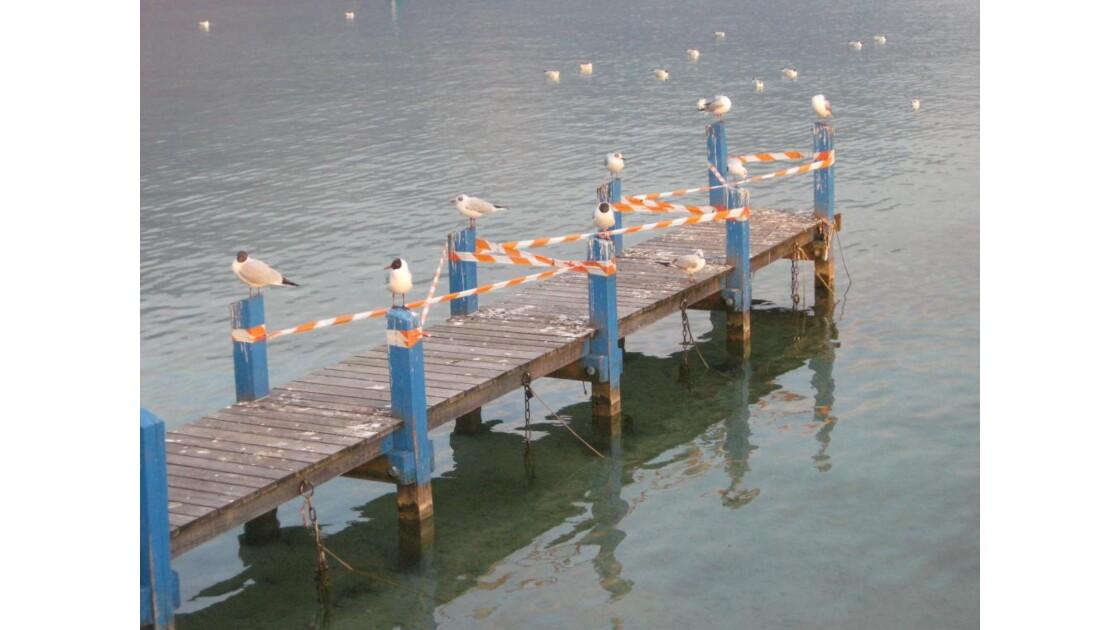 Pont des Mouettes (en chantier)