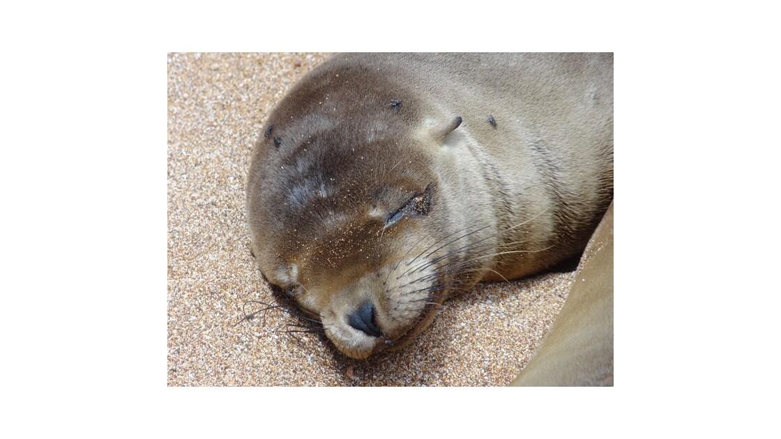 Galapagos__le_Bartolome_otarie__640x480