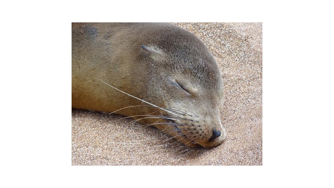 Galapagos__le_Bartolome_otarie_2__640x4