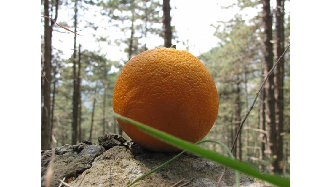 Orange , d'Italie