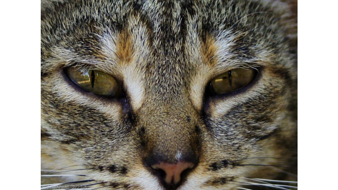 Les yeux dans les yeux.