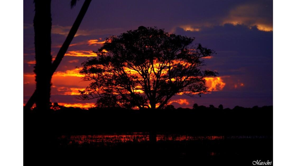 Couché sur le Pantanal